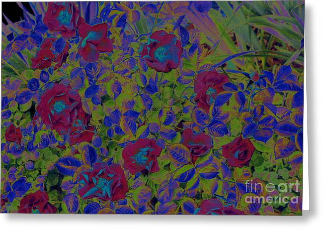 Greeting Card featuring the photograph Roses By Jrr by First Star Art