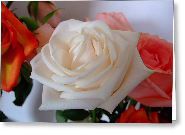 Roses Greeting Card by Deborah DeLaBarre
