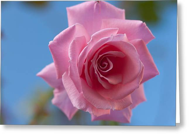 Roses In The Sky Greeting Card