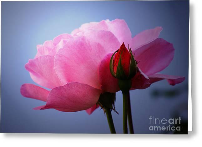 Roses  Greeting Card by Lutz Baar