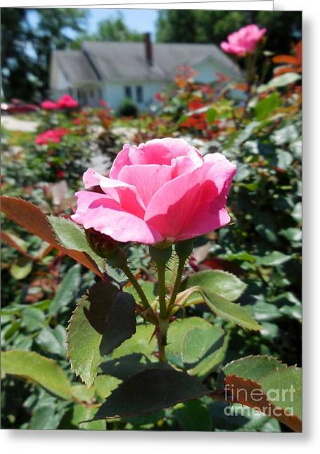 Roses Near A Country House Greeting Card by Eloise Schneider
