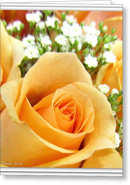 Roses Orange Blossoms Greeting Card by Danielle  Parent