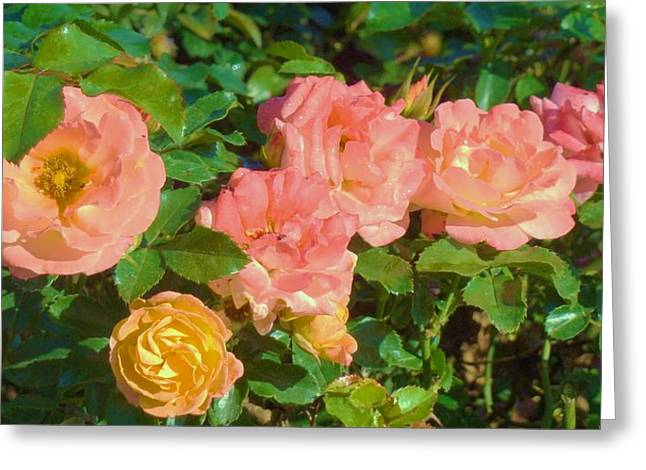 Roses Greeting Card by Van Ness