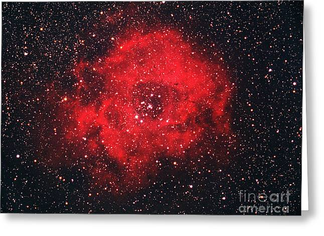 Rosette Nebula Greeting Card by Chris Cook