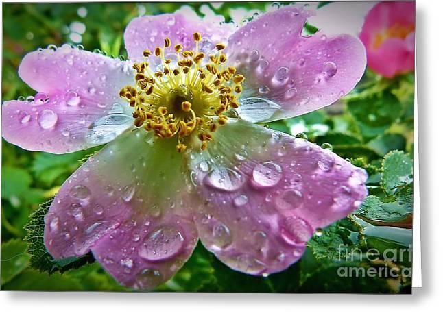 Rosey Raindrops Greeting Card