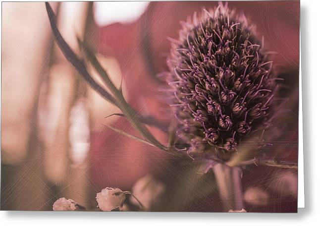 Rosy Haze  Greeting Card by Maibel  Ziello