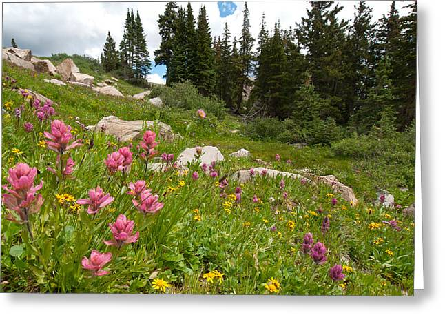 Greeting Card featuring the photograph Rosy Paintbrush And Trees by Cascade Colors