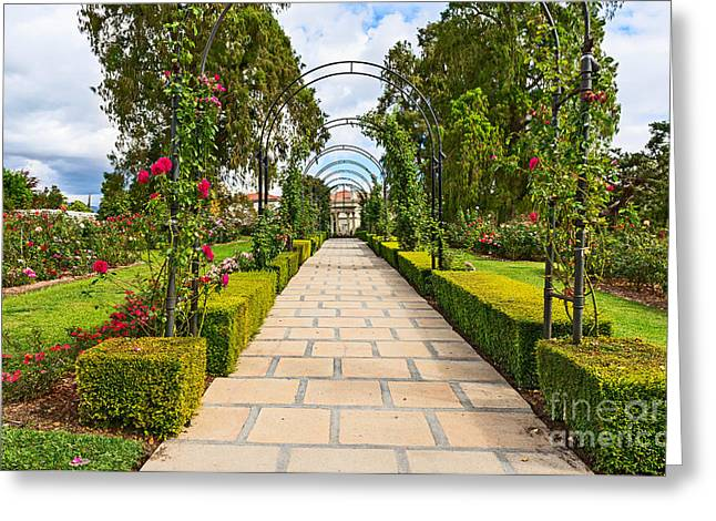 Rosy Path Greeting Card