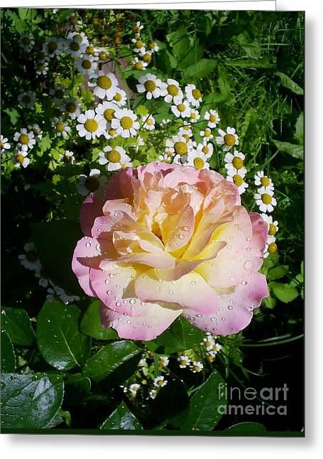 Rosy Shades II Greeting Card