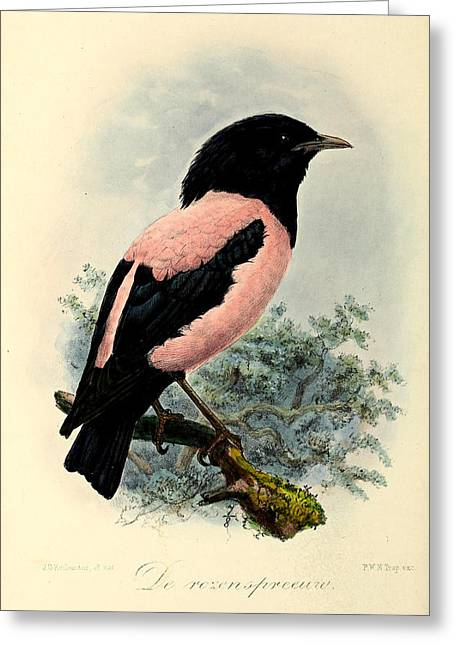 Rosy Starling Greeting Card by Rob Dreyer