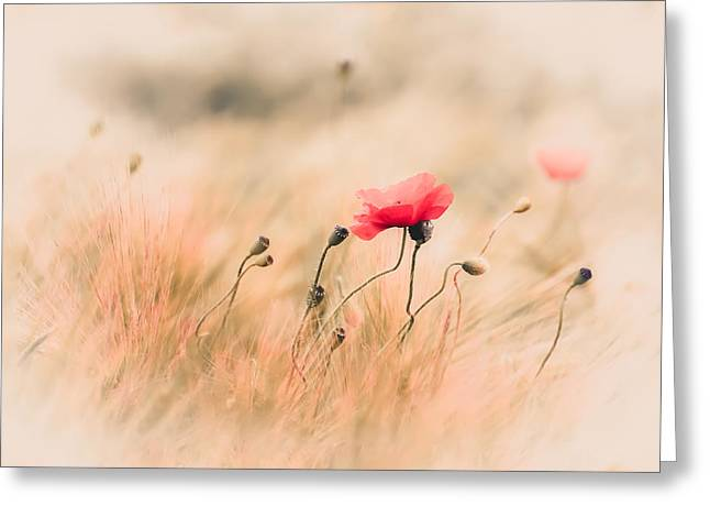 Red Poppy In The Field Greeting Card by Annette Hanl
