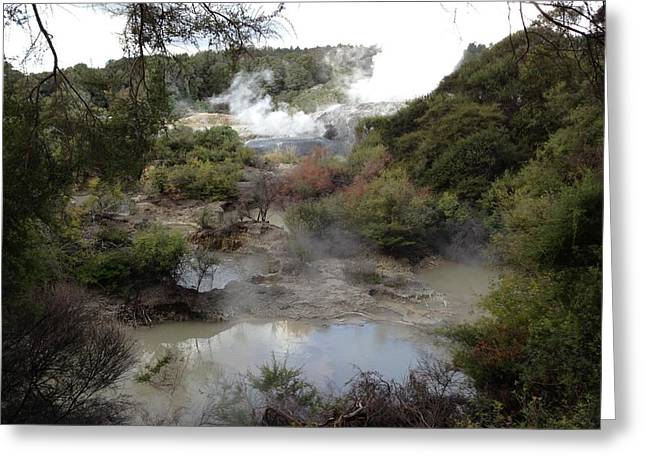 Rotorua Greeting Card by Ron Torborg