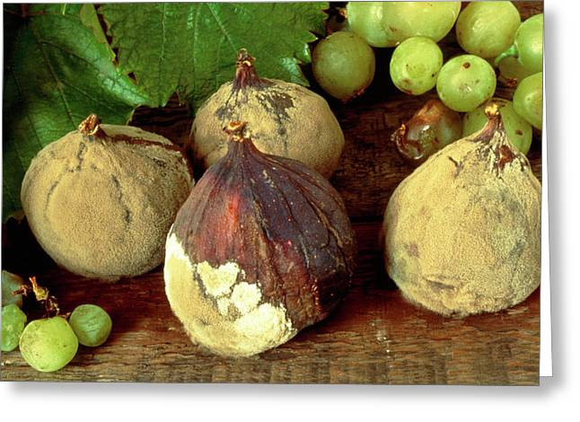 Rotting & Mouldy Figs Greeting Card