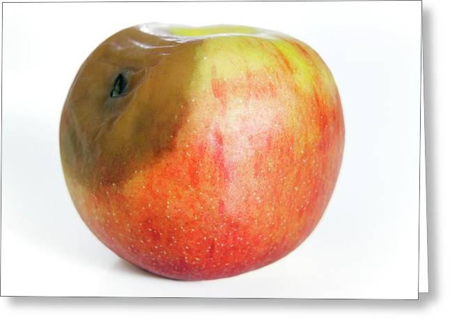 Rotting Apple Greeting Card