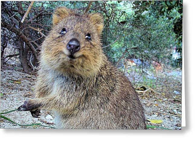 Rottnest Quokka Greeting Card