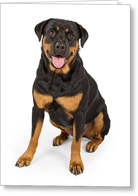 Rottweiler Dog Isolated On White Greeting Card by Susan Schmitz