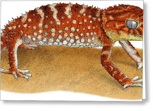 Rough Knob Tailed Gecko Greeting Card by Roger Hall