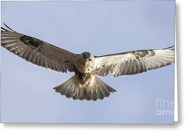 Rough-legged Hawk Coming Right At You Greeting Card by Ricky L Jones