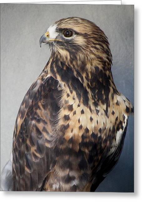 Rough-legged Hawk Greeting Card by Paulette Thomas