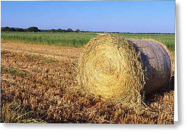 Round Bales Of Hay Tx Greeting Card by Panoramic Images