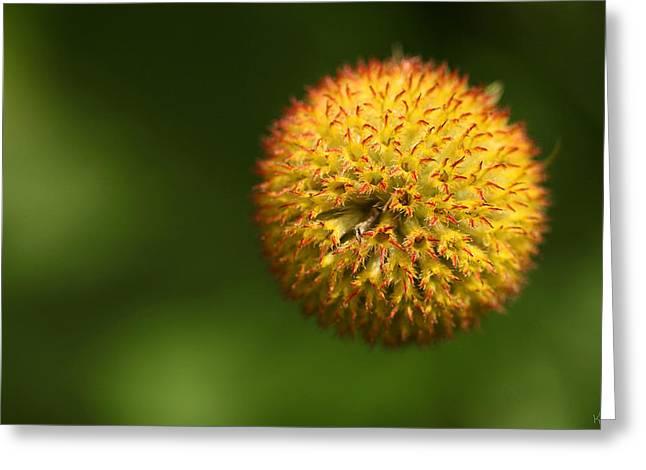 Round Flower Greeting Card by Karol Livote