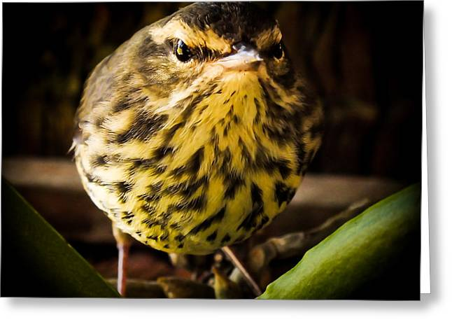 Round Warbler Greeting Card by Karen Wiles