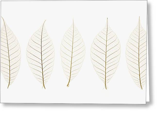 Row Of Leaves Greeting Card by Kelly Redinger