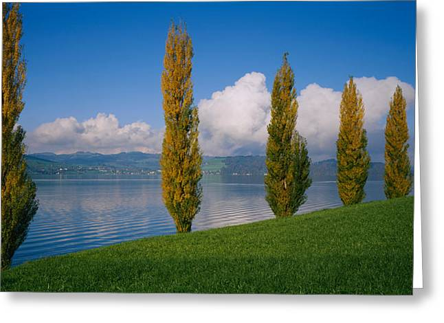 Row Of Poplar Trees Along A Lake, Lake Greeting Card by Panoramic Images