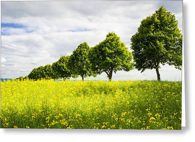Row Of Trees In Spring Landscape Green And Yellow Greeting Card