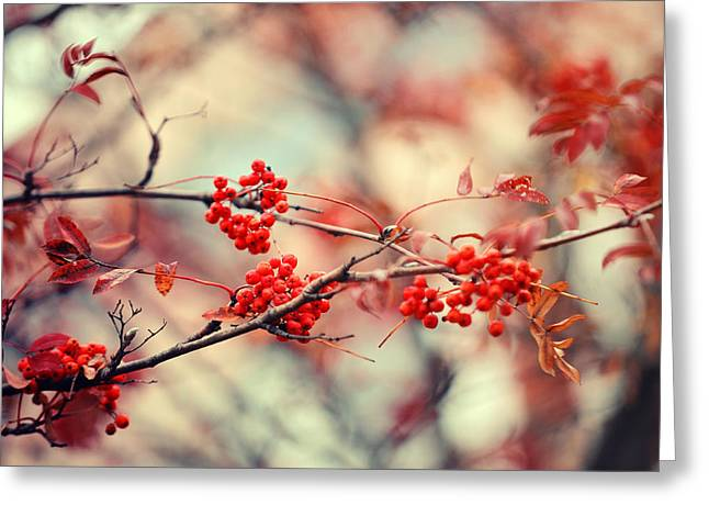 Rowan Tree With Berries Greeting Card