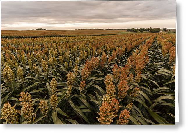 Greeting Card featuring the photograph Rows Of Color by Scott Bean