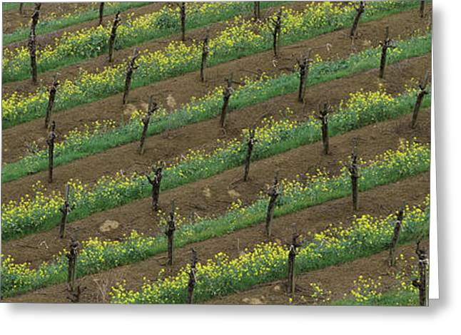 Rows Of Grape Vines With Mustard Greeting Card