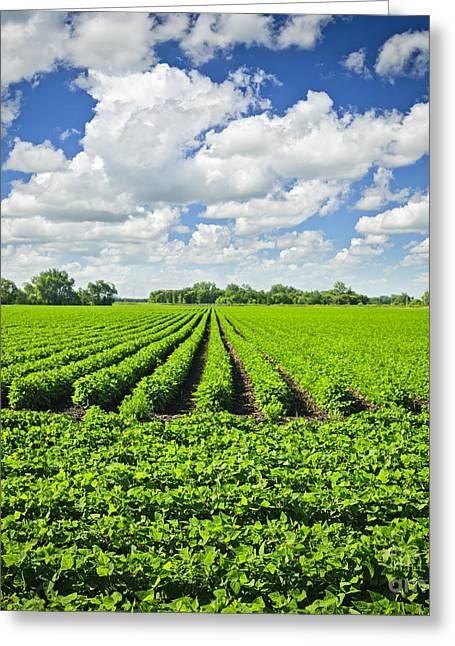 Rows Of Soy Plants In Field Greeting Card by Elena Elisseeva