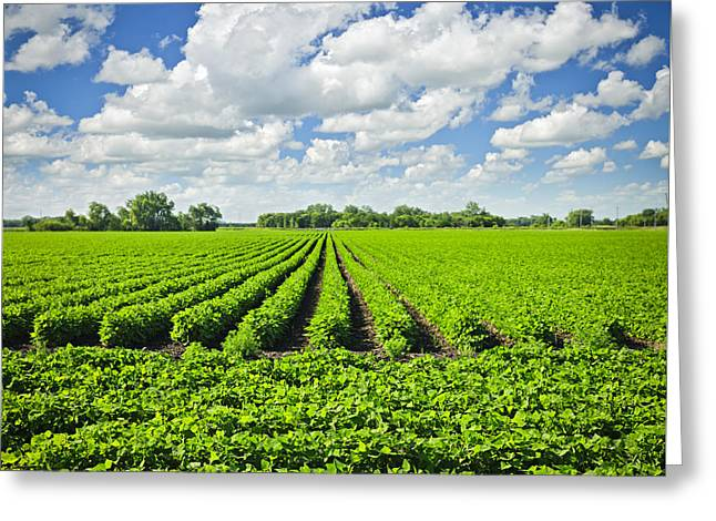 Rows Of Soy Plants In Field Greeting Card