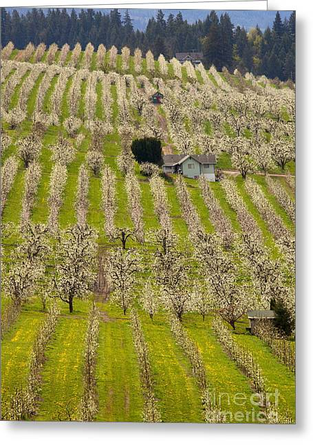 Rows Of Spring Greeting Card