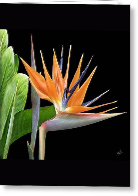 Royal Beauty I - Bird Of Paradise Greeting Card