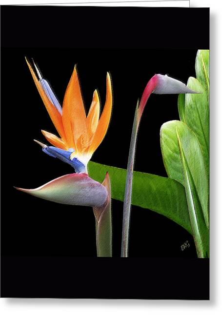 Royal Beauty II - Bird Of Paradise Greeting Card