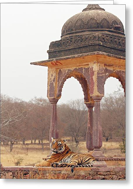Royal Bengal Tiger At The Cenotaph Greeting Card by Jagdeep Rajput