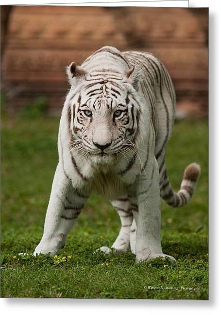Royal Bengal Tiger Greeting Card