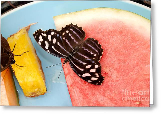 Greeting Card featuring the photograph Royal Blue Butterfly by Eva Kaufman