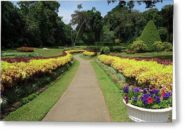 Royal Botanical Gardens, Peradeniya Greeting Card by Panoramic Images
