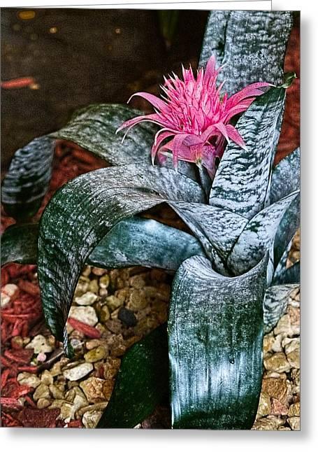 Royal Bromeliad Greeting Card by Sandra Pena de Ortiz