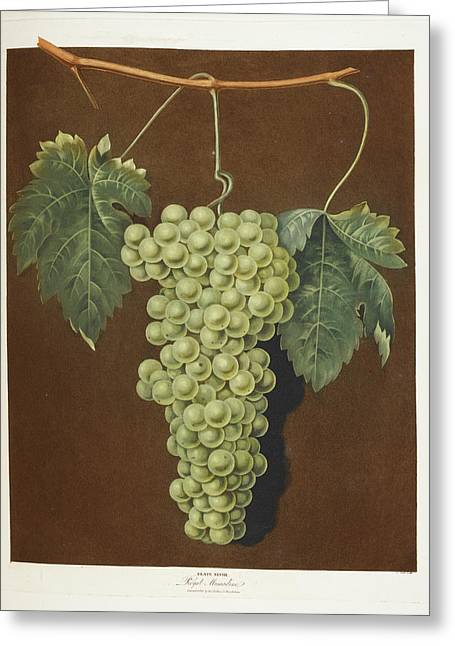 Royal Muscadine Greeting Card by British Library