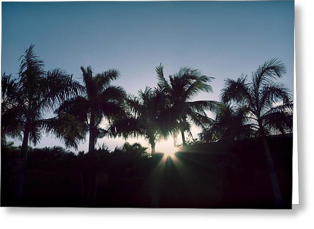 Royal Palm Sunset Greeting Card