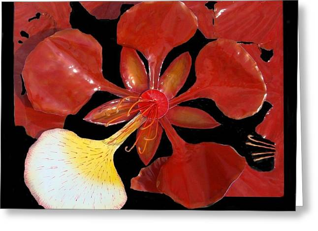 Royal Poinciana Bloom Set In A Bed Of Petals Greeting Card by Diane Snider