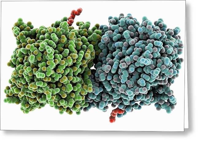 Rpe65 Retinal Pigment Protein Greeting Card by Laguna Design
