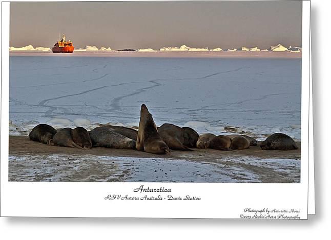 Rsv Aurora Australis Greeting Card by David Barringhaus
