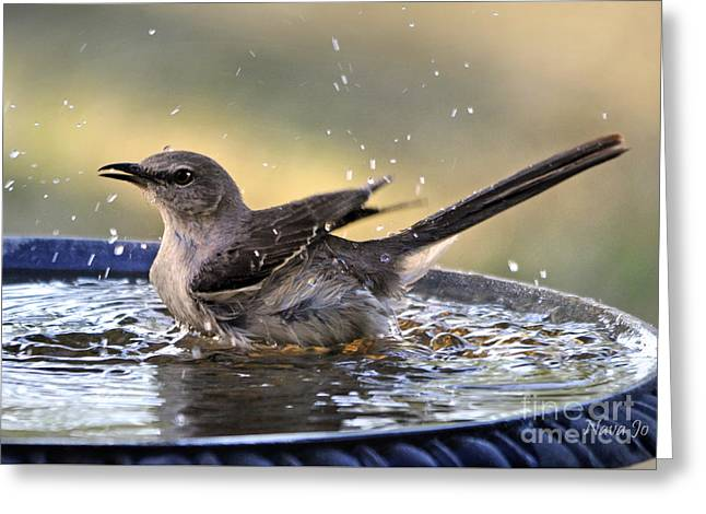 Rub-a-dub-dub Mockingbird Greeting Card by Nava Thompson