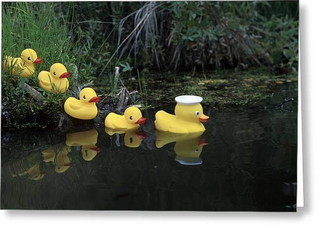 Rubber Ducks In A Row Pond Southcentral Greeting Card by Jeff Schultz