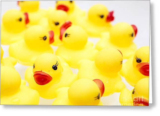 Rubber Ducky You Are The One Greeting Card by Edward Fielding